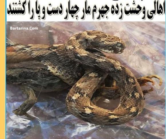 کشته شدن مار چهار دست و پا در روستای نوداد جهرم + عکس
