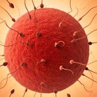 راههای افزایش سرعت حرکت اسپرم ها