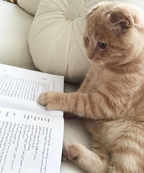 گربه کتاب خوان بهنوش طباطبایی+ عکس